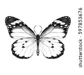 Stock vector butterfly with open wings top view the symmetrical drawing graphics sketch vector black and white 597853676