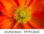 Orange Flower Close Up Of...