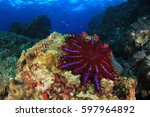 crown of thorns starfish | Shutterstock . vector #597964892