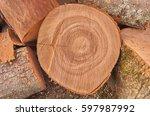Sawed Oak Tree Trunk. Cross...