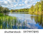 Forest Lake With Reeds On The...