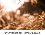 flowers in the morning | Shutterstock . vector #598013636