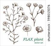 flax set.  botanical... | Shutterstock .eps vector #598015076