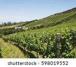 Valley Vineyard In Cape Town ...