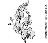 sketch of orchid flowers | Shutterstock .eps vector #598186115
