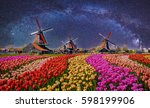 night landscape with tulips and ... | Shutterstock . vector #598199906