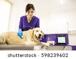 veteriarian with dog office   Shutterstock . vector #598239602