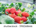 fresh strawberry are on the... | Shutterstock . vector #598268666