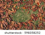 leaves are so dry | Shutterstock . vector #598358252