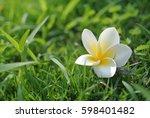 white flower over green grass... | Shutterstock . vector #598401482