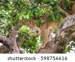 lioness hides in the foliage of ... | Shutterstock . vector #598756616
