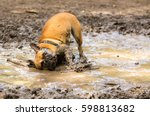 French Bulldog Having Fun In A...