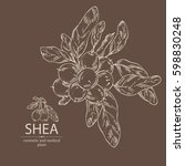 background with shea nut.... | Shutterstock .eps vector #598830248