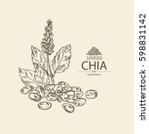 background with chia  plant and ... | Shutterstock .eps vector #598831142