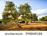 old olive grove at sunset in... | Shutterstock . vector #598848188