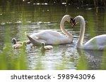 Swan Family  Swan Love.