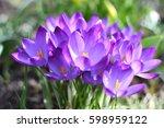 View Of Blooming Spring Flowers ...