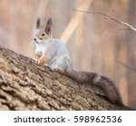 the eurasian red squirrel.... | Shutterstock . vector #598962536