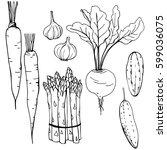 hand drawn vegetables. carrots  ... | Shutterstock .eps vector #599036075