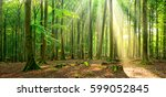 natural beech tree forest... | Shutterstock . vector #599052845