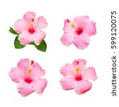 Collection Of Hibiscus Flower...