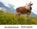 Brown Milk Cow In A Meadow Of...