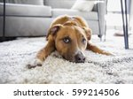 shepherd mix puppy dog makes... | Shutterstock . vector #599214506