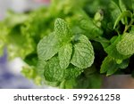 mint leaf close up background | Shutterstock . vector #599261258