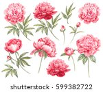 Stock photo set of botanic floral elements red flowers collection with leaves and flowers drawing watercolor 599382722