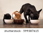 Cats and a dog eating pet food...