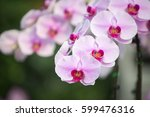 Beautiful Purple Orchid  ...