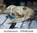 fox skull with crystal ball on... | Shutterstock . vector #599481668