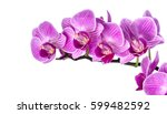 Stock photo pink streaked orchid flower isolated on white 599482592