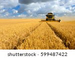 combine harvester cutting wheat ... | Shutterstock . vector #599487422