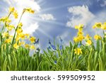 spring flowers with sunny blue... | Shutterstock . vector #599509952