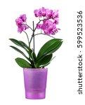 beautiful orchid in a purple...   Shutterstock . vector #599523536