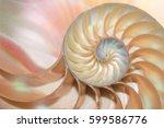 nautilus shell cross section... | Shutterstock . vector #599586776