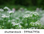 Small photo of Allium tuberosum in Daxi, Taiwan