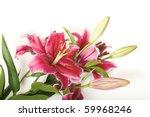 pink stargazer lily. | Shutterstock . vector #59968246