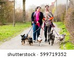 Stock photo dog sitters walking their customers 599719352