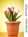 bunch of tulip flowers on the...   Shutterstock . vector #59979628