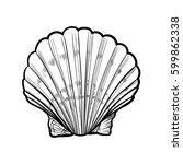 seashell  sea shell  nature...   Shutterstock .eps vector #599862338