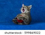 Stock photo cat with red woolen ball little grey tabby kitty playing with skein of tangled sewing threads on 599869022