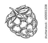 raspberry fruit. superfood... | Shutterstock .eps vector #600001208