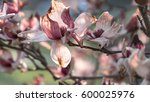 flowering tree branches with... | Shutterstock . vector #600025976