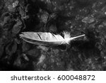 Floating Feather B W