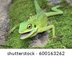 green lizard crawling on a... | Shutterstock . vector #600163262