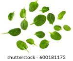 spinach isolated on white... | Shutterstock . vector #600181172