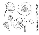 black poppies isolated on a...   Shutterstock .eps vector #600225095