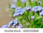 bright bunches of blue flowers... | Shutterstock . vector #600232868